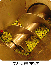 オリーブオイル Santiago(サンチャゴ)|オリーブ粉砕中写真