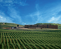 オリーブオイル Santiago(サンチャゴ)|広大なオリーブ畑
